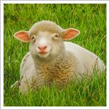 Wolle Bottrop