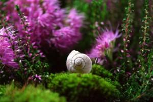 snail-582201_1920